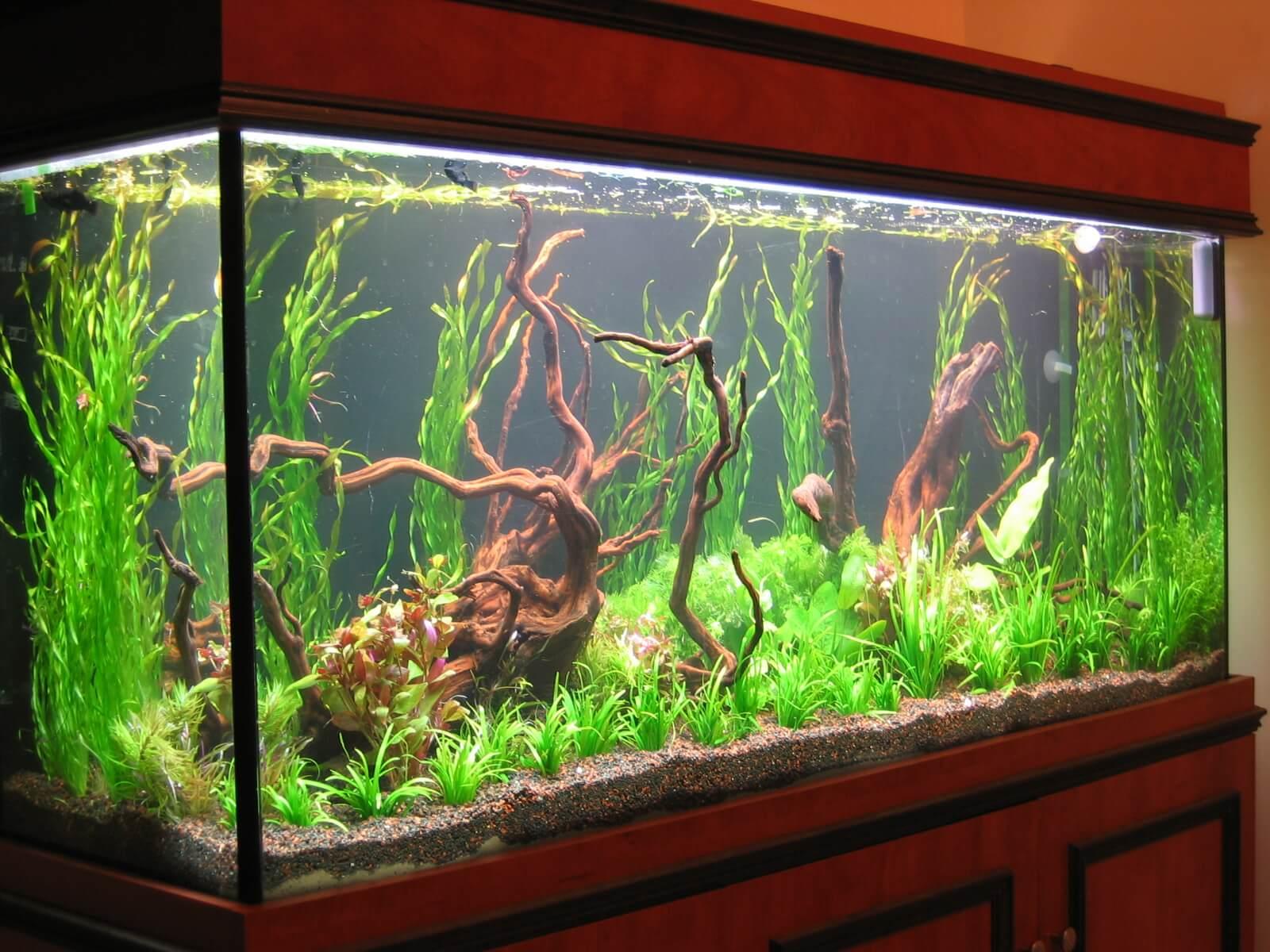 aquariums/8.jpg